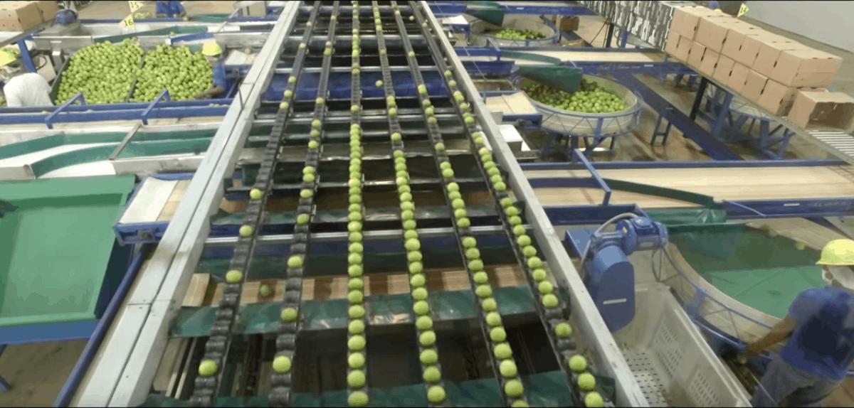 fluid-bed-dryer-totai-citrus